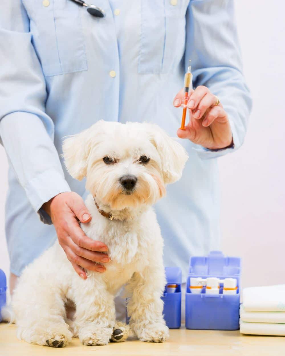 Malteser Impfung