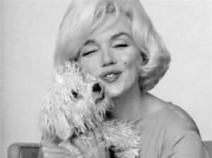 Merilyn Monroe mit Malteser Mafia Honey