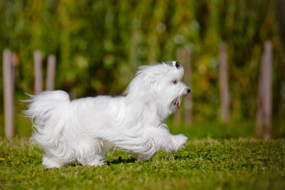 Suchen Sie Ihren Hund täglich, am besten nach jedem Spaziergang, auf Zecken ab