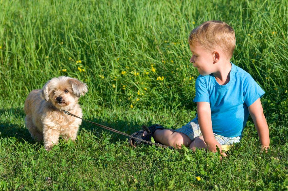 Kleiner Junge mit Malteser im Gras