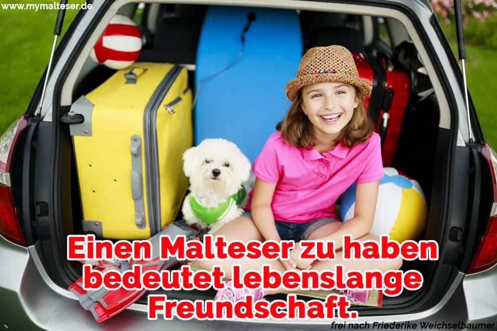 Ein Mädchen sitzt mit ihrem Malteser im Kofferraum